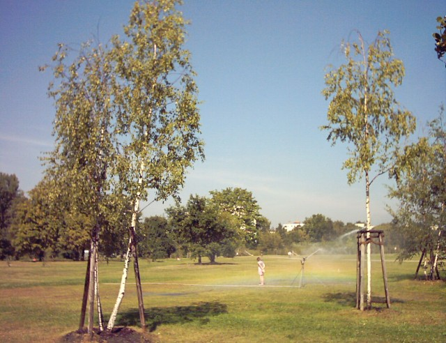 in the foreground birches, behind them on a lawn an irrigation sprinkler creating a rainbow and a girl in the sprinkling water